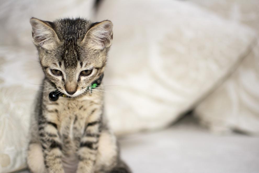 înghețata pisica vinovată miruna ioani